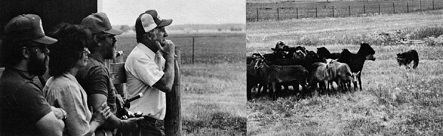 Mushers Bill Brisbois, Ginger Dunlap, HOWL editor en Harris Dunlap bekijken Lewis Pulfer op zijn boerderij in de buurt van Quincy, Ohio. Geacclimatiseerde en lichamelijk fitte honden zoals bijvoorbeeld een competitieve border collie, kunnen beter werken in de gevaarlijke zone van verhoogde lichaamstemperatuur boven de 41 graden Celsius