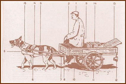 Over de grens mogen honden wel voor de kar lopen. Naast de sledehondensport heeft zich daar het carting ontwikkeld en in landen als Amerika gaat men zelfs nog een stapje verder met weight pulling.